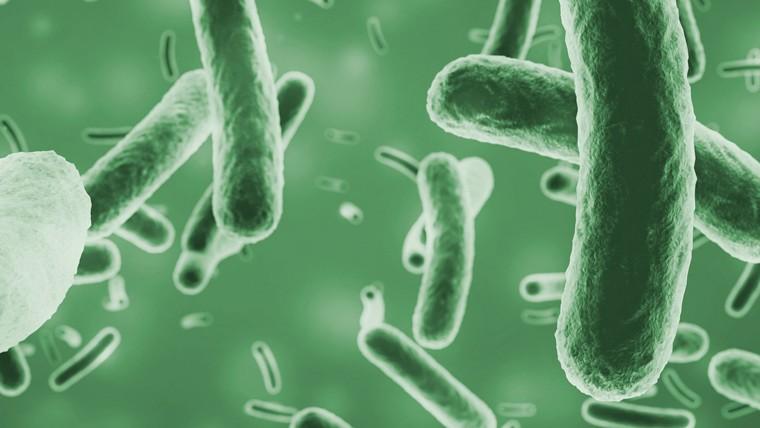 I batteri si moltiplicano maggiormente in presenza di biofilm